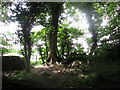 SE8983 : Sunlight  at the  edge  of  Chafer  Wood by Martin Dawes