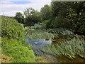 ST9267 : River Avon near Lacock by David Dixon