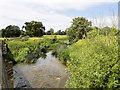 ST9268 : River Avon, Upstream from Lacock Bridge by David Dixon
