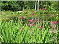 NR6447 : The pond at Achamore by M J Richardson