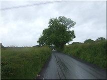 NS6965 : Commonhead Road by JThomas