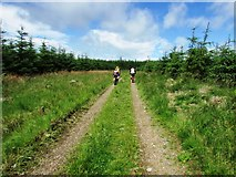 NO2605 : Path to Purin Hill, Lomond Hills by Bill Kasman
