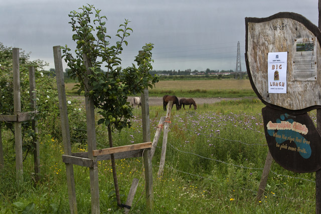 Apple trees and horses