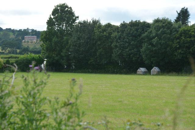 Cullompton : Grassy Field