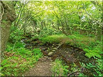 NH5857 : Stepping stones over the Ferintosh Burn by valenta