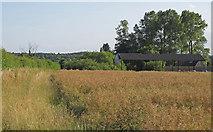 TM4592 : Looking over Oilseed Rape crop near Sutton's Farm, Aldeby by Roger Jones