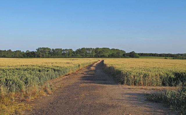 Farm track through Wheat Field, near Mill House, Aldeby