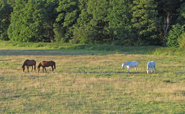 Horses in pasture, near Hollow Way Hill, Gillingham