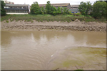 ST5772 : River Avon (New Cut), Bristol by Stephen McKay