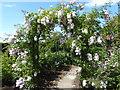 TR0660 : Part of the Millennium Rose Garden, Mount Ephraim Gardens by Marathon