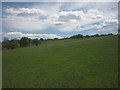 NZ0335 : Pastureland near White Kirkley by Karl and Ali