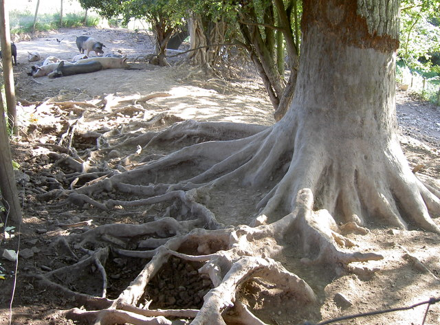 Gnarled and exposed
