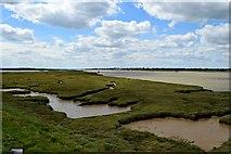 TQ9694 : Ringwood Point (5) by John Myers