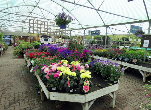 Plants at Rutland Garden Centre