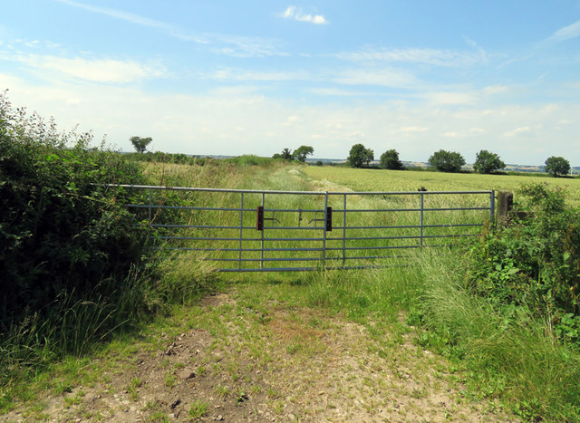 Fields and hedges west of Pasture Lane North