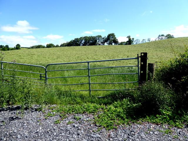 Grass field, Tullybryan