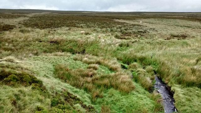 Small meander Cartledge Brook