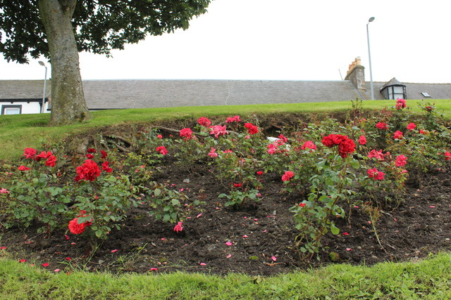 Rose Bed, Girvan