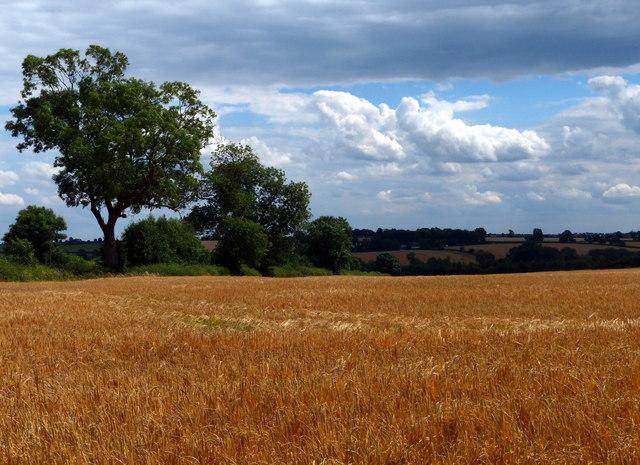 Farmland near Great Glen