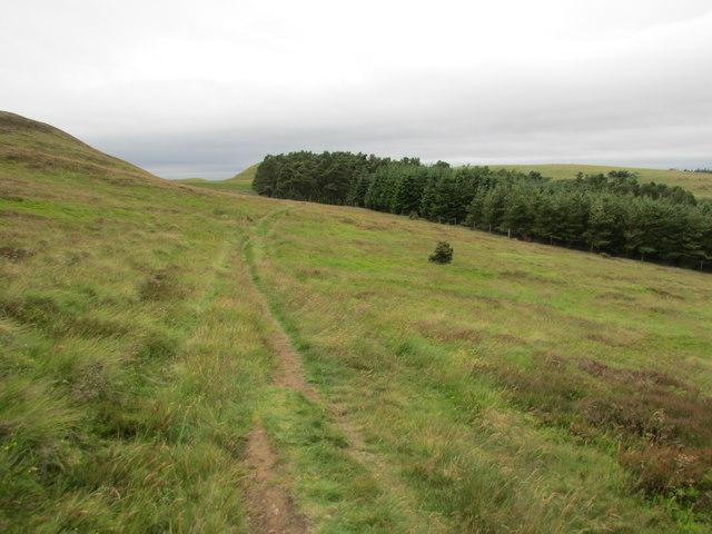 Path to Maiden Castle, Lomond Hills