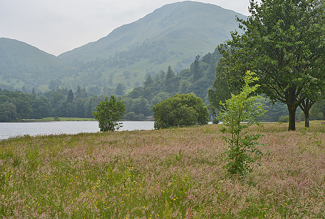 Meadow near the head of Ullswater