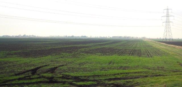Willow Row Farms