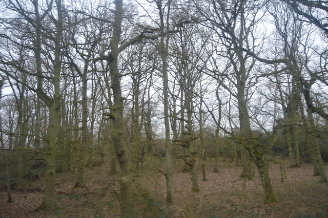 Trees by the railway Line