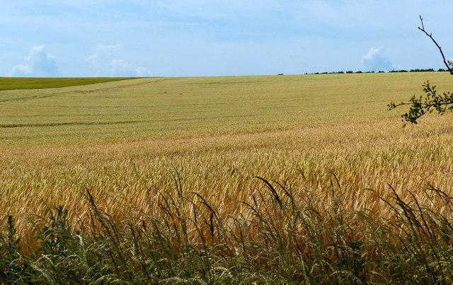 Farmland next to the Peddars Way
