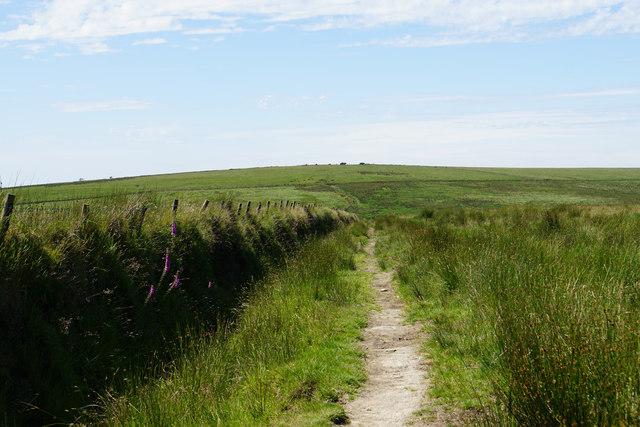 Path towards Pinkery Pond