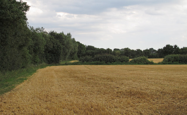 Recently Harvested Wheat Field, near Pigstye Green, Willingale