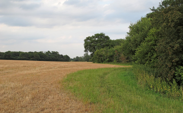 Footpath in Field Margin, near Patience Bridge, Roxwell