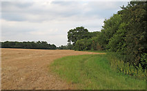 TL6307 : Footpath in Field Margin, near Patience Bridge, Roxwell by Roger Jones