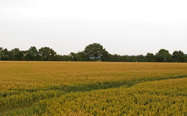 Wheat Field near Quires Green, Willingale