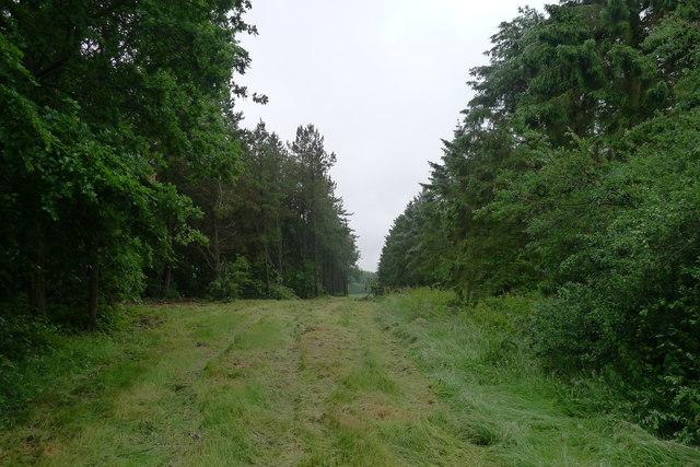 Footpath through Strifts Plantation