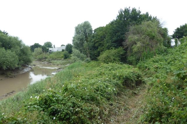 Mown path along the river bank