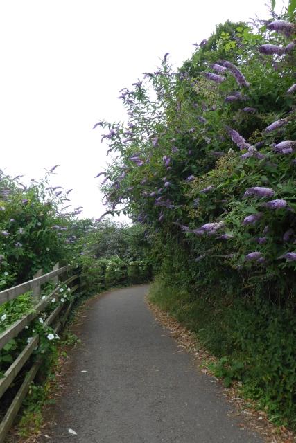 River path near Avon Bridge