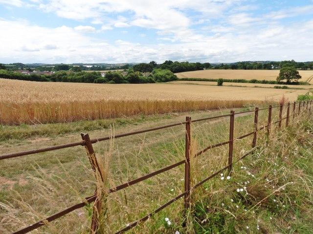 Farmland, south of Bishops Lydeard