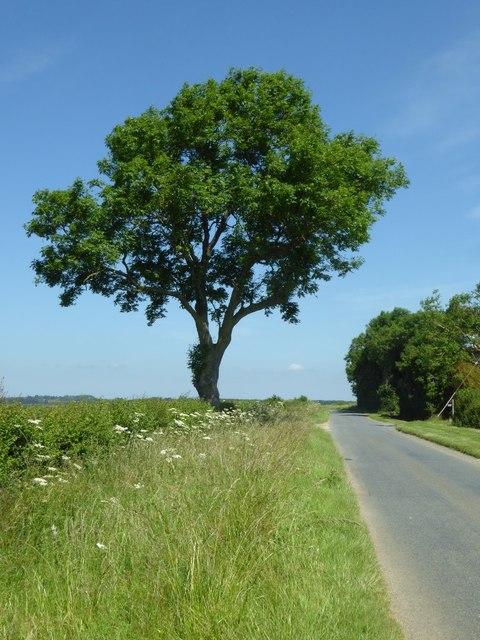 A roadside tree