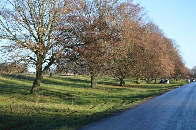 Trees lining Newbald Rd