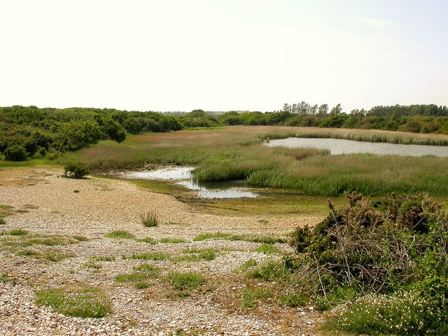 Part of The Severals on the Pagham Harbour SSSI
