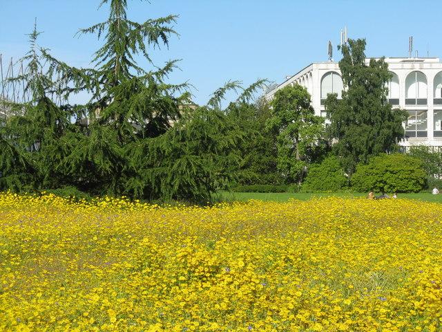 Meadow at the Royal Botanic Garden Edinburgh
