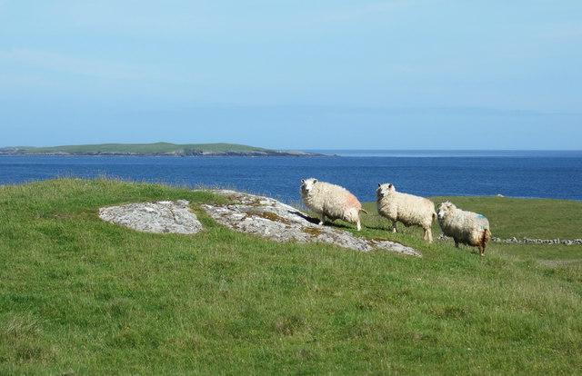 Three Sheep at Treawick
