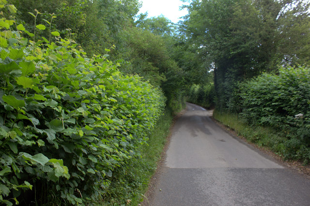 Hog Lane near Woodfield Spring Farm