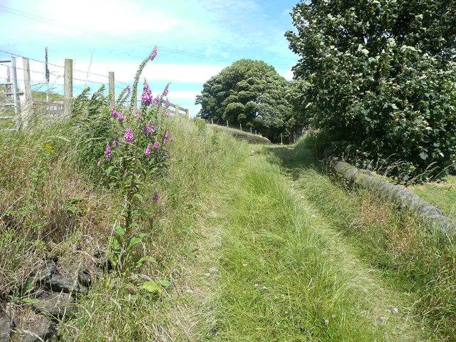 Pigman Lane approaching Winterburn Lane, Warley