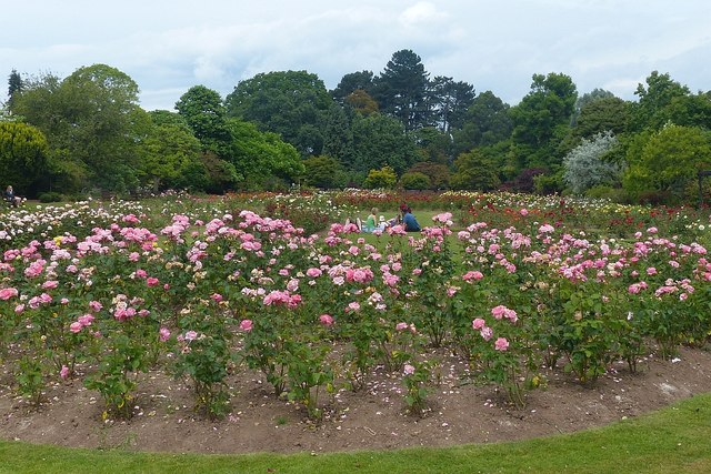 A picnic in the rose garden, Roath Park, Cardiff
