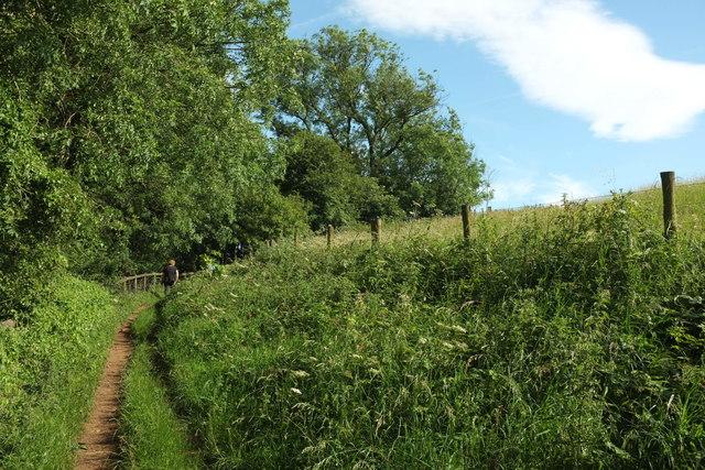Wychavon Way beside Long Plantation #2