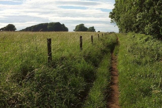 Wychavon Way beside Long Plantation #3
