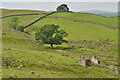 NY4500 : Ruin and fields above Browfoot by Nigel Brown