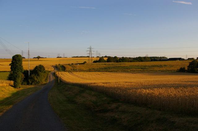 Little Blakenham: the drive to the Hall, in evening light