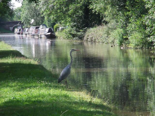 Heron, Shropshire Union Canal